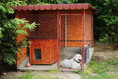 Dog in the kennels — Stock Photo