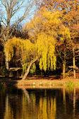 金树 — 图库照片
