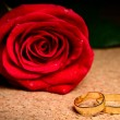 Rose and rings — Stock Photo