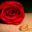 Rose and rings — Stock fotografie