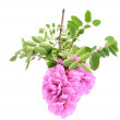Pink acacia flower isolated — Stock Photo