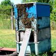 Stock Photo: Rural wooden beehive