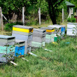 Rural wooden beehives — Stock Photo