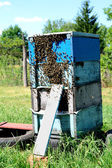 Rural wooden beehive — Stock Photo