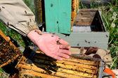 Apicultor y sus abejas — Foto de Stock