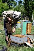Biodlare arbetar — Stockfoto