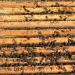 Bee colony — Stock Photo #25654483