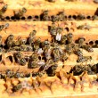 Bee colony — Stock Photo #25654487