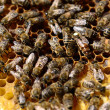 Bee colony — Stock Photo #25654499