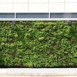 Green wall building — Stock Photo