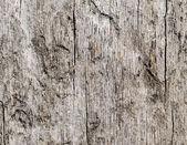 Wooden texture of oak tree — Stock Photo