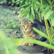 Shy young cat, look at the camera, from under bush — Stock Photo