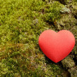 Heart shape on a moss background — Stock Photo
