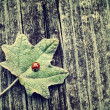 Vintage photo of ladybug on green leaf — Stock Photo