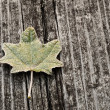 Leaf on a wooden background — Stock Photo