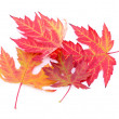 Colorful autumn leaves isolated on white — Stock Photo