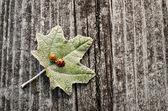 Leaf on a wooden background — 图库照片