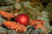 Christmas composition with decoration — Stock Photo