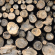 Raw wood logs in a lumber staging — Stock Photo