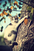 Kitten on the tree — Stock Photo