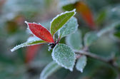 Rime on leafs on a late autumn — Stock Photo