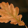 Autumn oak leaf — Stock Photo #37158885