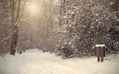 Frozen forest with snow — Stok fotoğraf