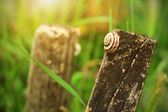 Small snail resting in the meadow — Stock Photo