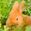 Baby bunny eat in spring grass — Stock Photo #43796039