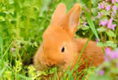 Baby bunny eat in spring grass  — Stock Photo