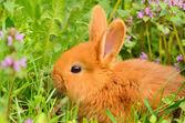 Baby bunny sitting in spring grass  — 图库照片