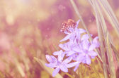 Dreamy photo of bee on wildflower — Stockfoto