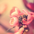 Closeup photo of a bee on red flower — Stock Photo #45482073