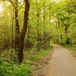 Morning light falls on a forest road — Stock Photo #45482451