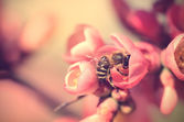 Closeup photo of a bee on red flower — Stockfoto