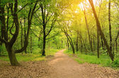 Morning light falls on a forest road — Stock Photo