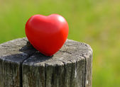 Heart shape on a tree trunk — Stock Photo