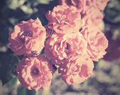 Vintage photo of a bouquet rose — Stock Photo