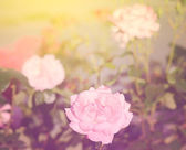 Dreamy photo of a bouquet rose — Stock Photo