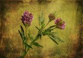 Vintage photo of a purple wildflower — Stock Photo