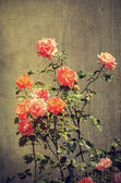 Vintage photo of a roses — Stockfoto