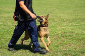 K9 police officer with his dog — Stock Photo