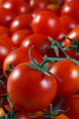 Cherry tomatoes close to one another in quantities — Stock Photo