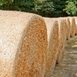 Stock Photo: Harvest time: series of hay bales