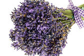 Bouquet of lavender flowers cut on white background — Stock Photo