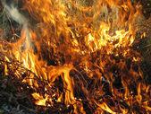 Amazing wildfire outdoor — Stock Photo