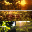 Beautiful countryside collage images — Stock Photo #26955813