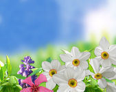 Group of beautifull flowers at spring season — Stock Photo