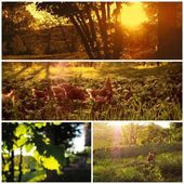 Beautiful countryside collage images — Stockfoto