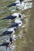 Hejno ptáků na řece — Stock fotografie